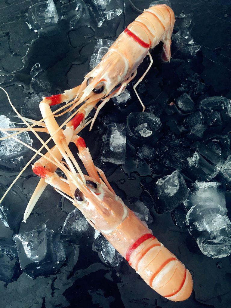 南极海螯虾