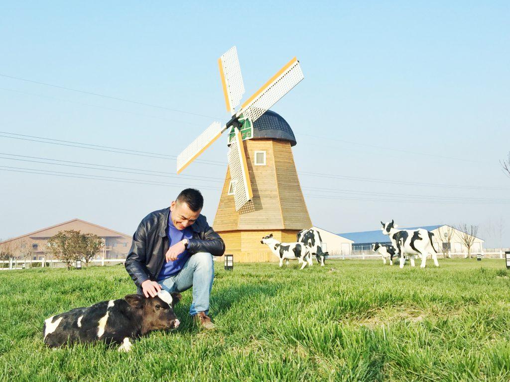 牧场实景-徐晓波与小奶牛