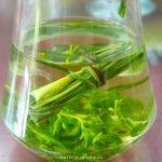 海口|香草榨油 甜叶菊代糖 南渡江河鲜-香世界庄园带你回归自然