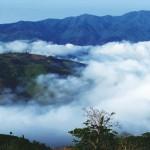 【专栏】南宛有古茶 藏于深山中