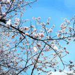 武汉丨在最美的季节,记录下珍贵的重逢